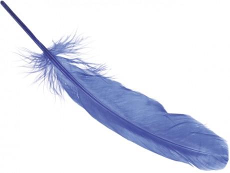 Žąsų plunksnos art. 6620353