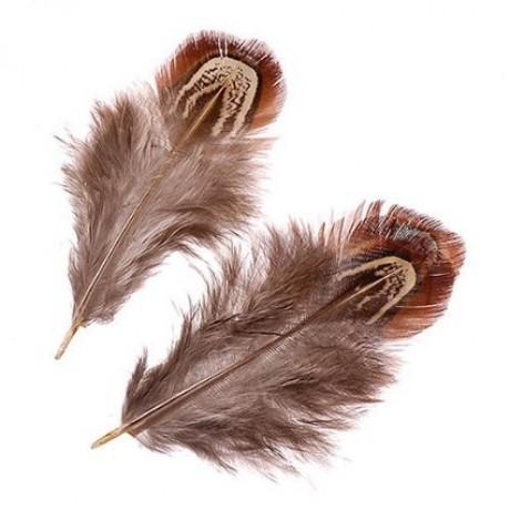 Fazano plunksnelės, art. 21-6617982
