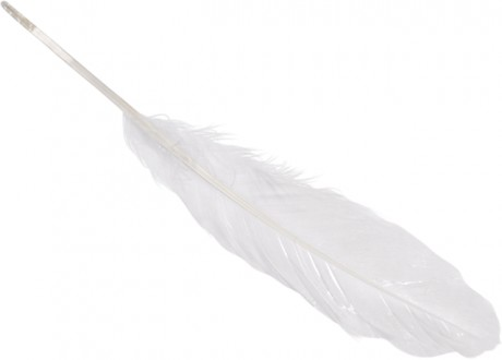 Žąsų plunksnos art. 6620000