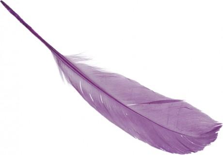 Žąsų plunksnos art. 6620272